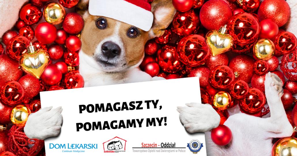 mikołajki-dom-lekarski-akcja-charytatywna-schronisko-toz-szczecin
